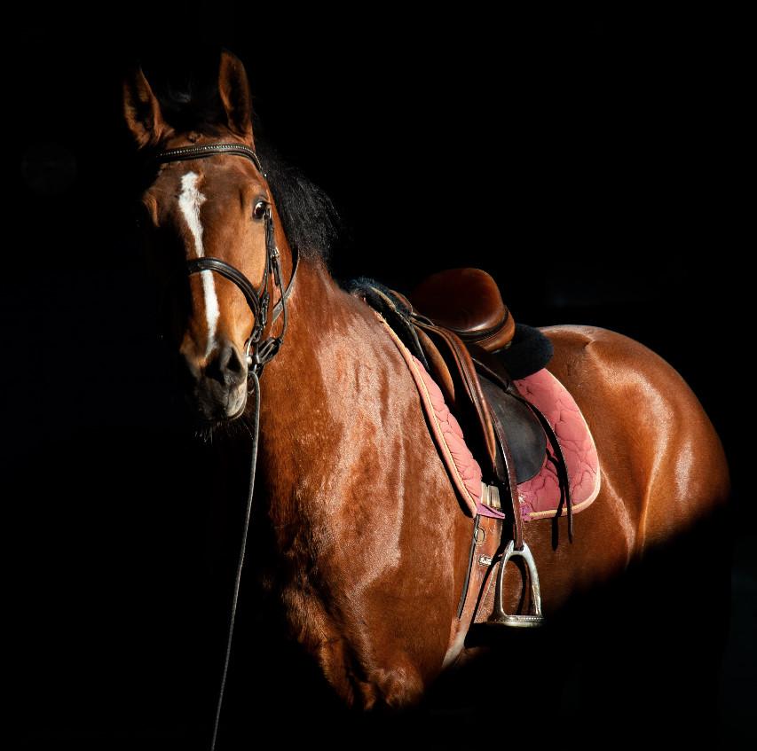Riding horse - reality not relentless positivity - Petros - good mental health