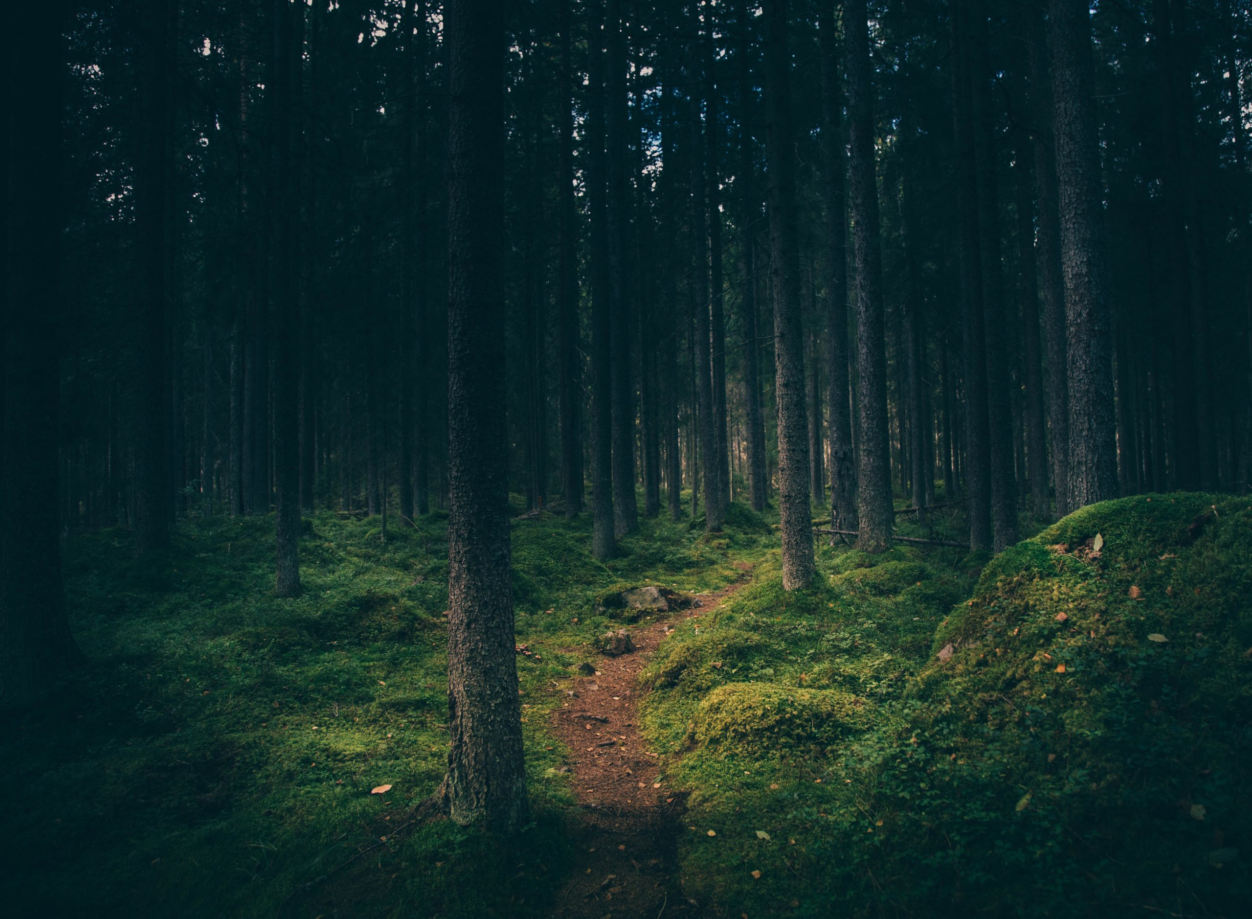 Lost in the woods - thinking - Petors - good mental health for all