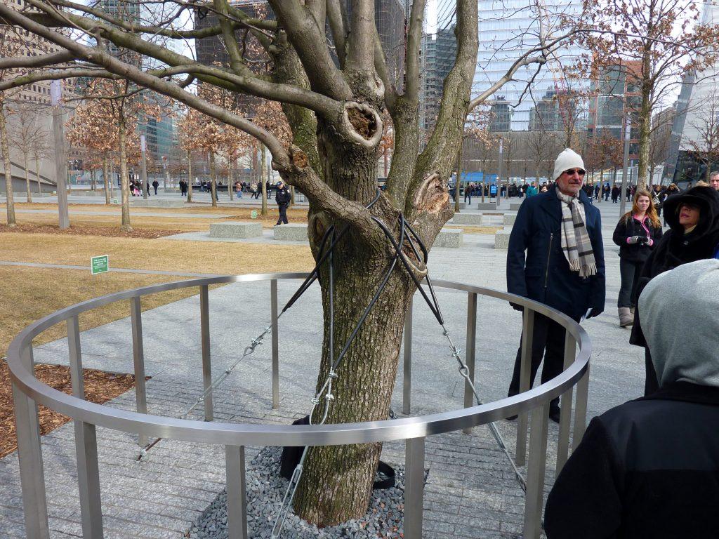 The Survivor Tree, New York City 2012