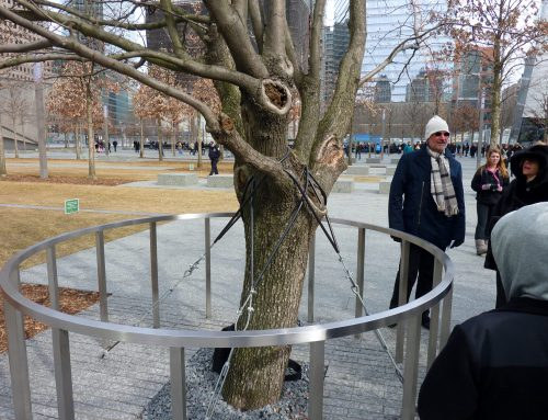 The Survivor Tree and Me