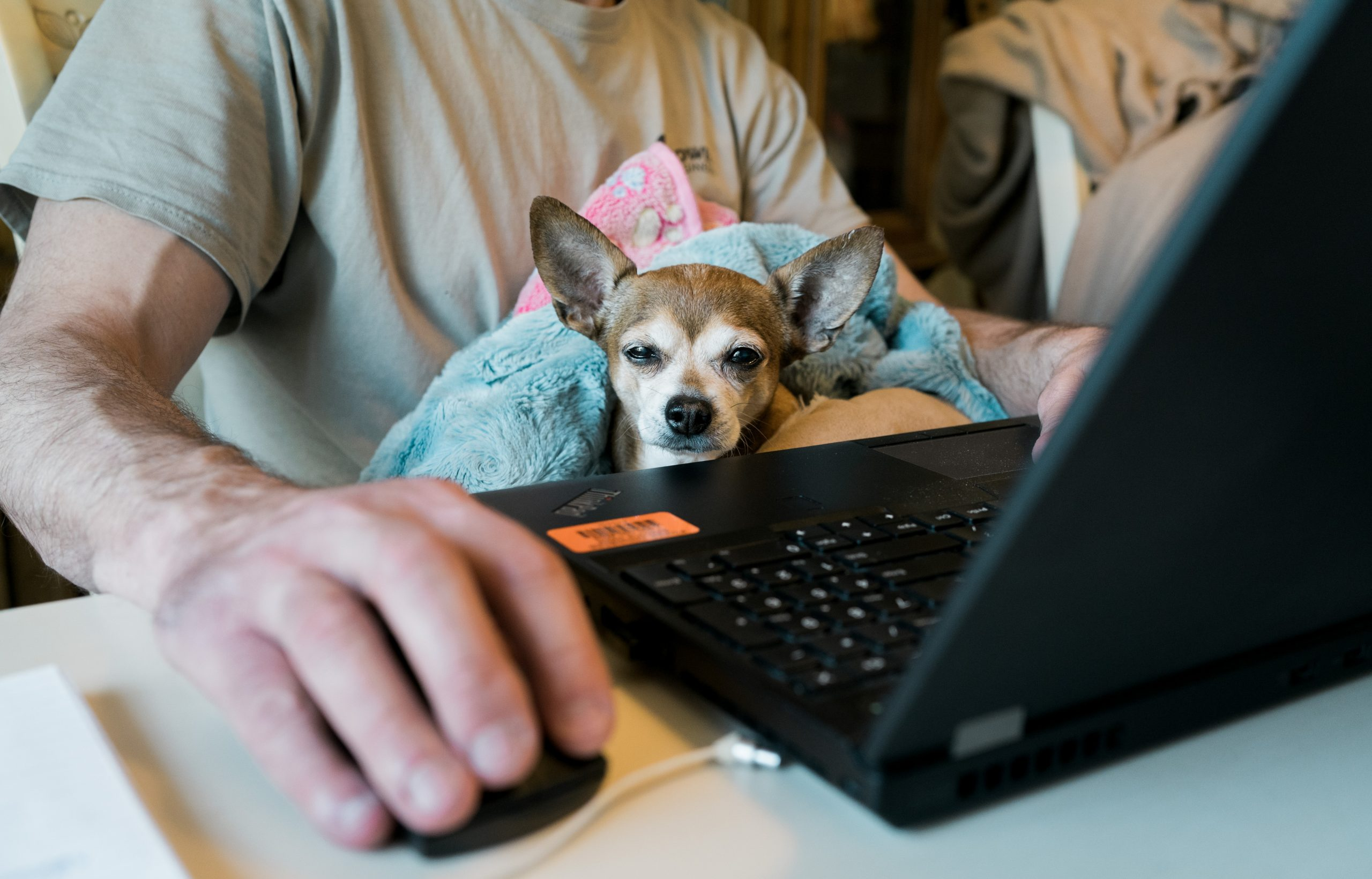 dog and laptop - tips for working from home - Petros - good mental health