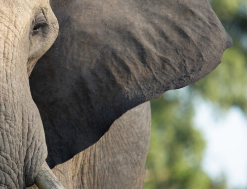 Spotting the Elephant in Your Wellbeing Room