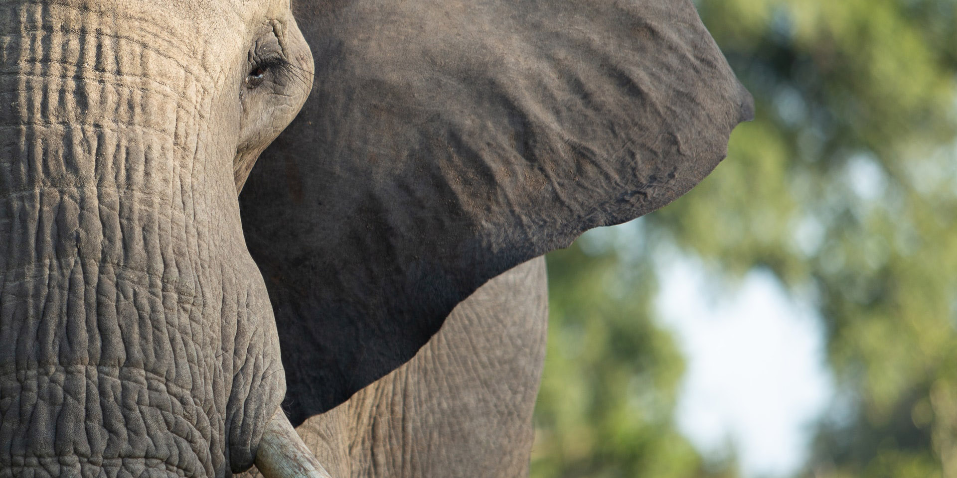 Spotting the Elephant in Your Wellbeing Room | Petros | good mental health for all